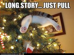 On the 1st Day of Catmas my True Love Gave to Me...