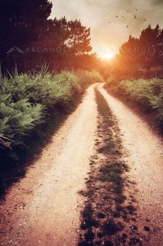 Dirt Trail by Carlos Caetano Trail, Country Roads, America, Fine Art, Wall Art, Gallery, Prints, Pictures, Stationary