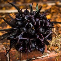 Some dark design work by Red floral architecture out of England! Halloween Wedding Flowers, Classy Halloween Wedding, Wedding Looks, Fall Wedding, Dream Wedding, Wedding Stuff, Wedding Ideas, Fall Bouquets, Floral Bouquets