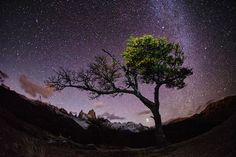 I hiked several hours through the night in Patagonia to find a tree I had seen a few days earlier and photograph it with the night sky. Location: Patagonia Source: Photo and caption by max seigal/National Geographic Traveler Photo Contest Night Photography, Amazing Photography, Nature Photography, Travel Photography, Patagonia, Cool Pictures, Cool Photos, Night Sky Photos, National Geographic Travel