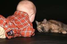 How to Introduce your new Baby to your Cat
