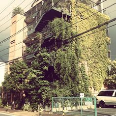 It's like living in nature/ tree. #mydream