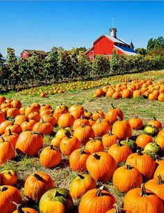 Allegedly someplace in Connecticut. Either way, this pumpkin farm looks very pretty.