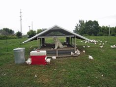 (Okay something is just odd about this one. Can't quite figure it out though. Chicken Coop Pallets, Broiler Chicken, Biggest Chicken, Portable Chicken Coop, Chicken Runs, Farm Gardens, Animal House, Farm Animals, Poultry