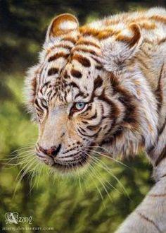 Soft pastel, PastelMat, cm Reference: Art (c) Azany White tiger Majestic Animals, Unique Animals, Cute Baby Animals, Tiger Pictures, Animal Pictures, Beautiful Cats, Animals Beautiful, Beautiful Drawings, White Bengal Tiger