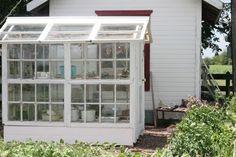 Greenhouse (old window frames )