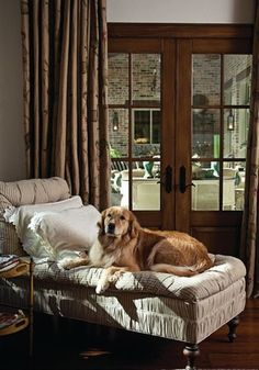 Overstuffed chaise upholstered in ticking-stripe, complete with adorable dog!!  White (linen?) pillows with ruffle flange. - By: Gibson Gimpel Interior Design in Plano, Texas - Photos by; Sara Donaldson