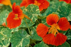 10 plants you can't kill gallery 1 of 10 - Homelife