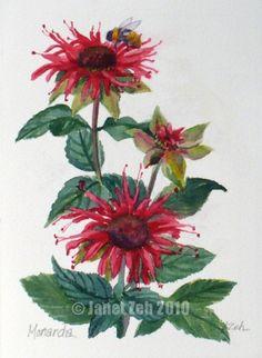 Zeh Original Art Blog Watercolor and Oil Paintings: botanical