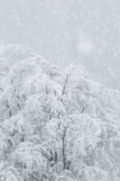 Wondering how to prepare for a snow storm? Get the facts on how to help prepare yourself and your home for winter storms with tips from Travelers. Winter Szenen, Winter Love, Winter Photography, Nature Photography, Photography Couples, Photography Portraits, Photography Ideas, Christmas Tree Farm, Winter Christmas