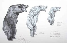 -Terryl Whitlatch One of the major divisions of Creature Design is that of depicting real animals, as opposed to imaginary ones. In fact . Bear Drawing, Anatomy Drawing, Animal Sketches, Animal Drawings, Ours Grizzly, Terryl Whitlatch, Urso Bear, Sketch Style, Muscle Anatomy