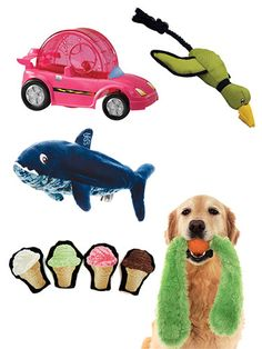 The Best Toys for Pets