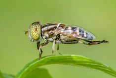 Insect, Macro, Fly, Animal, Nature