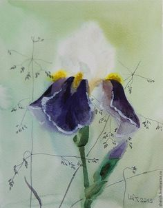 Купить акварель Ирис картина - цветок, ирис, ирисы, картины, картины цветов, белый, лиловый