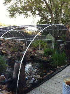 Pergola over pond koi ponds pinterest pond pergolas for Pond shade ideas