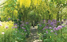 Rosemary Verey's famous laburnum walk at Barnsley House, an Eighties icon,   gets the chop