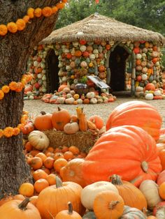 Pumpkin Village, The Arboretum