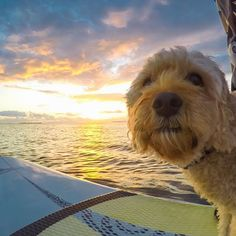 Happy Australia Day! The celebration down under is just beginning, so check out @goproanz for all things Aussie! # (Image via Kara Murphy)
