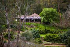 Araluen Botanic Park, Western Australia. A friend took me to the cafe in the distance for devonshire tea before I left last month. Stunning and delicious!