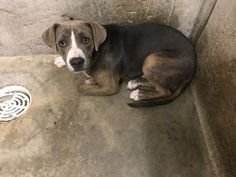 K25 DSCN1764 - URGENT - CODE RED - Big Spring Animal Control in Big Spring, Texas - This dog is in immediate danger of euthanasia! It needs to be adopted or rescued now! If you're reading this, please help or share. They don't have descriptions, just a number.