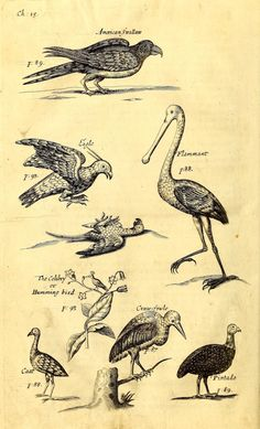 Plates from a History of the Carriby Islands (1666) | The Public Domain Review