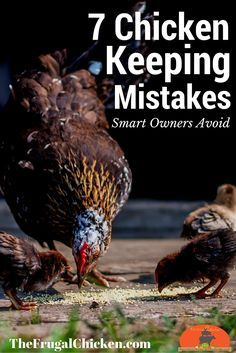 7 Natural Chicken Keeping Mistakes New Owners Make