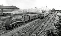 Diesel Locomotive, Steam Locomotive, Flying Scotsman, High Speed Rail, Steam Railway, Abandoned Train, Train Art, British Rail, Old Trains
