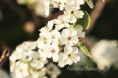 Hey, I found this really awesome Etsy listing at https://www.etsy.com/ca/listing/459786006/tree-blossoms-macro-photo-art-print