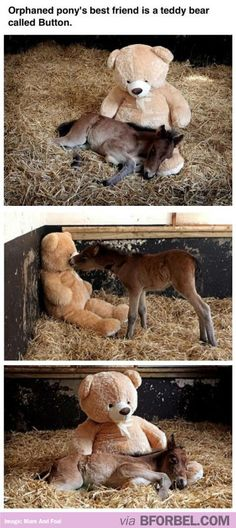 This Orphaned Pony's Best Friend Is A Huge Teddy Bear Called Button… Cue The Awws.