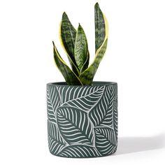 Cement Flower Pots, Terracotta Flower Pots, Cement Planters, Decorative Planters, Large Planters, Flower Planters, Ceramic Flower Pots, Potted Plants, Indoor Plants