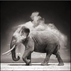 """Photographer Nick Brandt takes stunning snapshots of wildlife and people in Africa. He explains: """"There is also something deeply, emotionally stirring and affecting about the plains of Africa—the vast green rolling plains punctuated by the graphically perfect acacia trees."""""""
