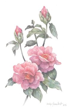 Camellia 10 x 8 lithograph by CShoresInc on Etsy