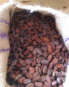 Memories of Madagascar.  Can't believe it was just over a year ago I got to experience the heady smells of the intoxicating cacao. . . . #memoriesofmadagascar #cacaobeans #plantationchocolate #chocolatiers #chocolatemaker #beantobar Cacao Beans, Madagascar, Cooking Recipes, Memories, Canning, Chocolate, Vegetables, Crafts, Food