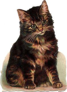 Oblaten Glanzbild scrap die cut chromo Katze 11,6cm tiger cat Helena Maguire: