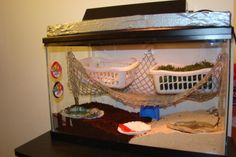 Great hermit crab habitat