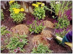 Mulching Perennials - Step 1
