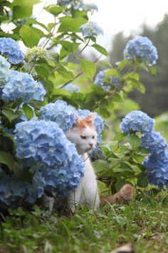 "* * "" Wut's wif deese blue clumps of flowerz ? I don'ts like blue cuz it makes meez moody. I wantz white."""