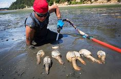 There's a Price to Pay for Not Eating America's Ugly Seafood (Clare Leschin-Hoar, TakePart.com, 28 JUne 2015)