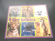 Baby Animals of the World by Carmen Bredeson (2011, Paperback)