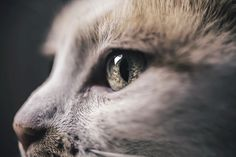 by Felicity Berkleef - Photographing Cats Helps Me Deal With My Insecurity And Dark Past | Bored Panda