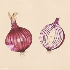 Vegetable Illustration, Plant Illustration, Onion Drawing, Potato Drawing, Vegetable Drawing, Watercolor Food, Watercolor Sketch, Watercolor Paintings, Art Inspiration Drawing