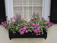 best summer flowers on balcony – Vyhľadávanie Google Window Box Plants, Fall Window Boxes, Window Box Flowers, Window Planter Boxes, Planter Ideas, Window Ideas, Diy Flower Boxes, Craft Flowers, Sun Flowers