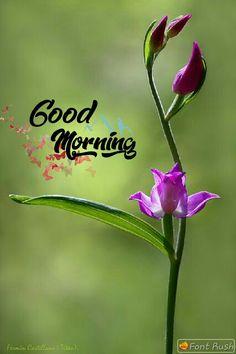 Good Morning Today, Good Morning Cards, Good Morning Flowers, Good Morning Messages, Good Morning Wishes, Good Morning Quotes, Morning Dua, Good Morning Beautiful Pictures, Good Morning Picture