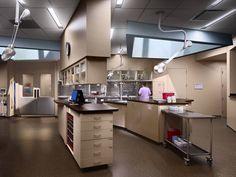 Memphis Veterinary Specialists / archimania - Treatment Room