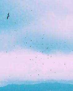 Si miras al cielo en las #IslasCíes te encontrarás algo así vía @monicabedmar #RíasBaixas #SienteGalicia #Galicia #GaliciaCalidade ➡ Descubre más en http://www.sientegalicia.com/
