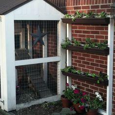 My vertical garden!
