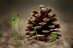 nature & more — the-colors-of-our-earth: New Life by Julia. Woodlands Cottage, Enchanted Wood, Walk In The Woods, Seed Pods, Plantar, Belleza Natural, Pine Cones, Fungi, Belle Photo