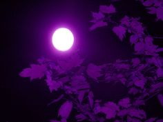 """""""All the other colors are just colors, but purple seems to have a soul. Purple is not just a noun and an adjective but also a verb--when you look at it its looking back at you."""" - Uniek Swain"""