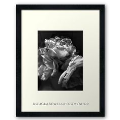 Everything Fades Prints Cards and Much More!  View my entire portfolio http://ift.tt/2i1uX76  #rose #flowers #garden #plants #nature #blackandwhite #blackandwhitephotography #products #cards #clothing #arts #crafts #technology #iphone #cases #bags #totes #photography #prints #home #housewares #journals #pillows