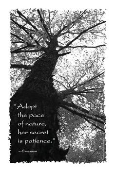 """""""Adopt the pace of nature, her secret is patience."""" - Emerson"""